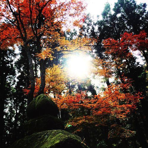 Japan 板室 地蔵 木の俣 Autumn Leaves
