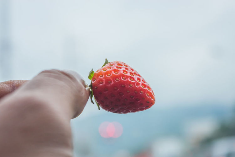 Cropped hand holding strawberry