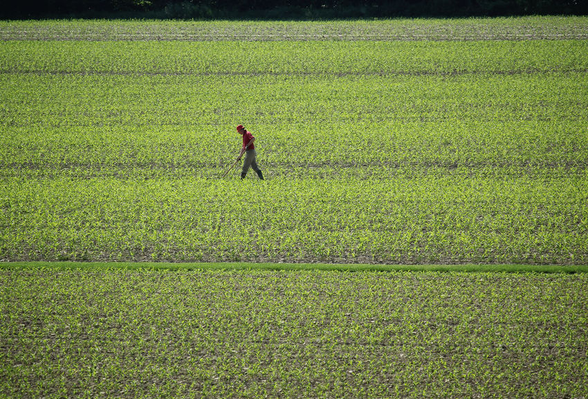 Agriculture Agro Industry Farmer Field Green Color Worker Agricultural Field Agricultural Land Agriculture Photography Farmwork Minimal One Man Only One Person One Person Walking