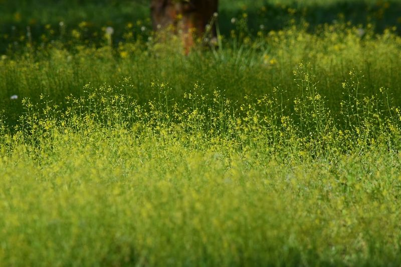 Wildflower Wild
