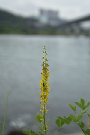 Yellowish Water Lake Insect Close-up Animal Themes Plant Water Plant Growing Plant Life Blooming