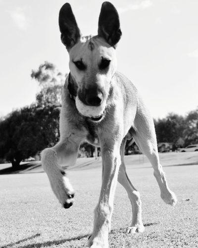 Portrait of dog running on street against sky