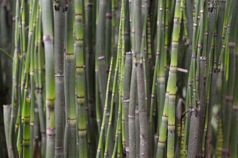 Full frame shot of sugar cane