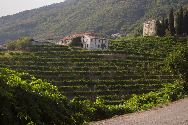 Rural Agriculture Day Italy Landscape Lone House Mountain Nature Outdoors Prosecco Rural Scene Scenics Summer Valdobbiadene Valley Venice Village Vineyard Winemaking Winery