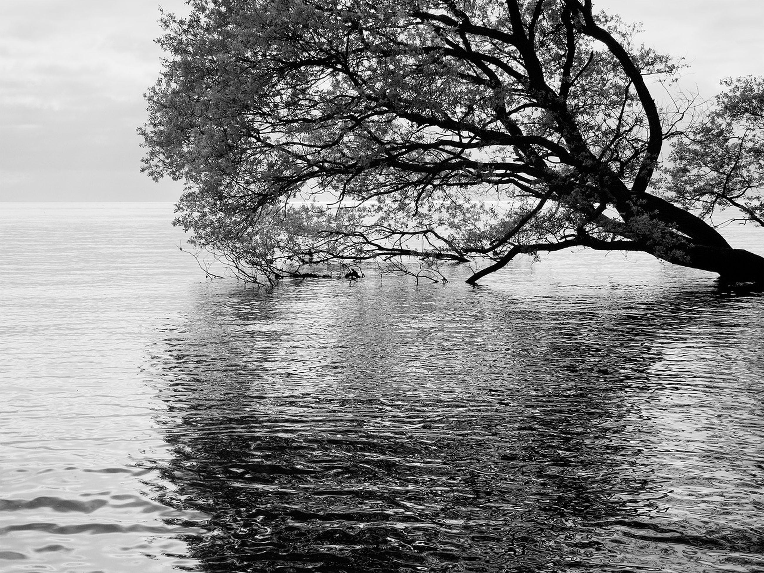 water, tree, tranquility, tranquil scene, sky, rippled, waterfront, sea, scenics, branch, nature, beauty in nature, bare tree, horizon over water, lake, idyllic, day, outdoors, no people, growth