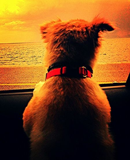 Joy ride... Charoula Dog❤ Dogstagram Doglife Popular Photos Car Ride