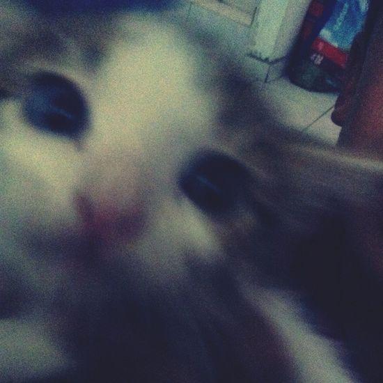 Tiny kitty kisses