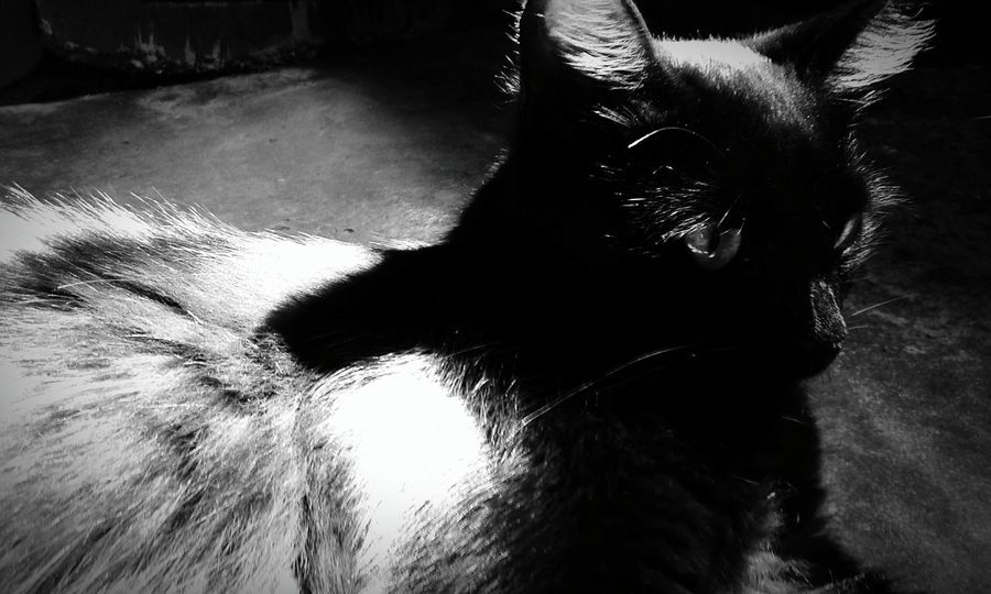 Mei Myblackcat Black & White Blackandwhite Photography Monochrome _ Collection Relaxing Darkness And Light