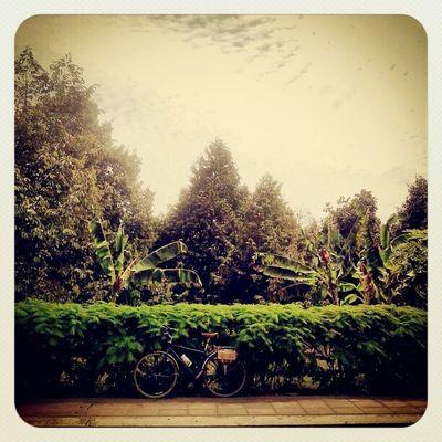อยากถ่ายรูปจักยานตรงนี้มานานแระ Bikeintrang Trang Touringbicycle