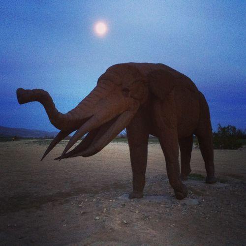 Desert Elephant Landscape Desert Beauty DesertAnimal Sky Sand Elephant Nature Land One Animal Mammal