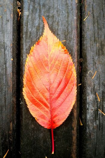 Day Leaf Autumn Directly Above No People Close-up Outdoors Nature Nature Perspectives On Nature Wallpaper Textured  Full Frame Backgrounds
