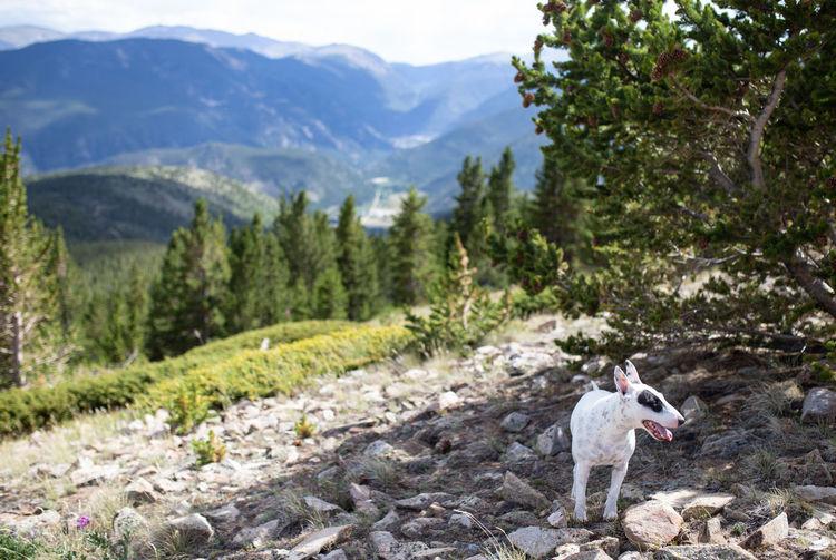 Dog on a mountain