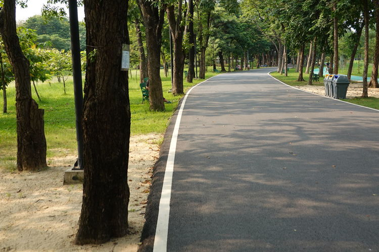 Road amidst trees in park