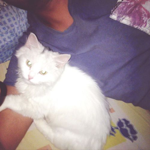7abeby Alby  Cat White Baby Ro7y Kiza😃😃😀😀😗😗😙😀😃😃😃🏡🏡🏡🏡🏡🏡🗼🗼🗼🗼