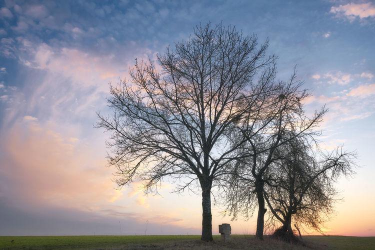 Sky Tree Bare