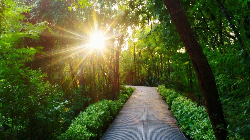Tree Nature Beauty In Nature The Way Forward Lush Foliage Sunbeam Tranquility Scenics Green Color Outdoors Forest Day No People Nature Peace Nature Lover❤ Amidst Nature Udaipur Hidden Path Paradise Dense Forest Miles Away