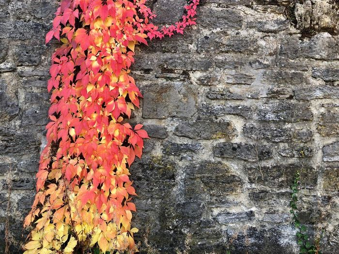 Autumn 🍁 No