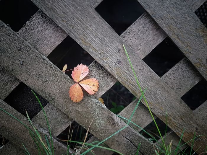 Close-up of flowering plants on wooden fence