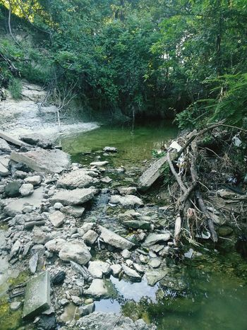 From my Outdoors Adventure a while back! Water Stream Forest Urban Nature Urban Forest Green Color Day Flowing Tranquility Tranquil Scene Tree Scenics River Flowing Water Nature Rock - Object Stone - Object Beauty In Nature Stone Plant WoodLand Non-urban Scene Same
