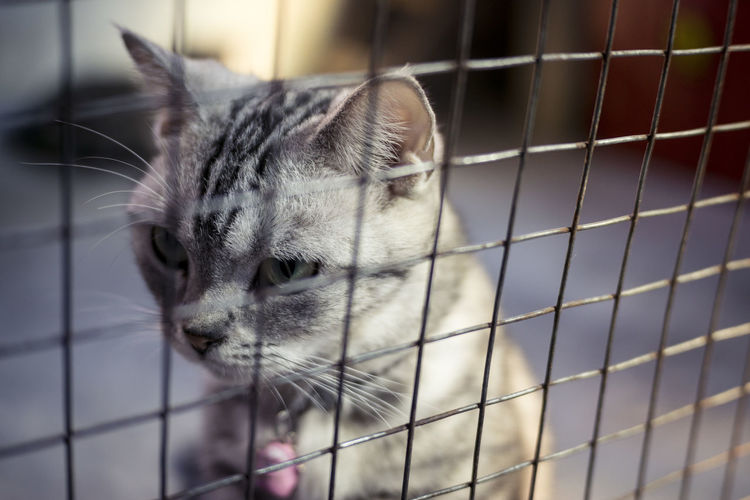 Alone Time Animal Themes Boring Cage Cat Close-up Foreground Focus Pet