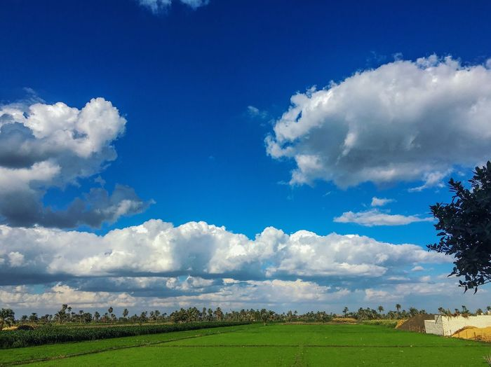 Landscape Nature Sky Tree Cloud - Sky Blue Landscape Field Scenics Day Outdoors No People Beauty In Nature Grass First Eyeem Photo