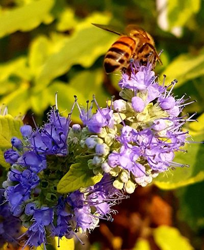 Bee 🐝 Flowers, Nature And Beauty Beauty In Nature Freshness Purple Close-up No People Insect Nature Nature On Your Doorstep Naturephotography Fragility Bee And Flower Flower Head Plant Life Colours Of Nature