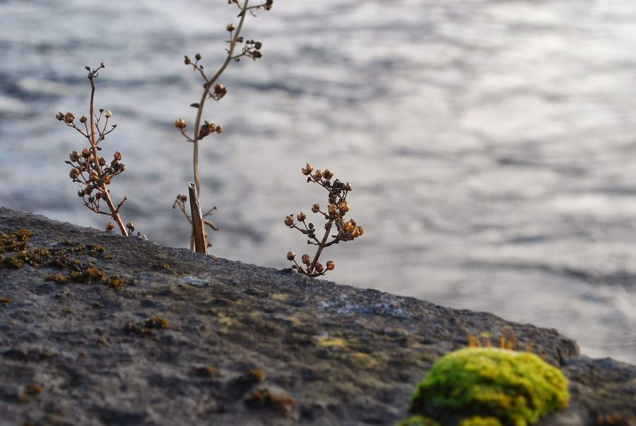 Along the Shannon River in Limerick, Ireland Beauty In Nature Day Nature No People Outdoors Plant River Stone Water