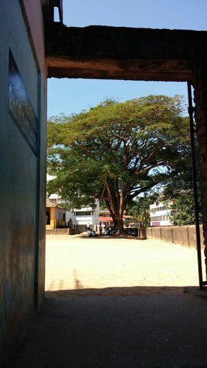 Class room under tree Showcase: November Classroom Undertrees Childrens No Roof Open School Kerala India