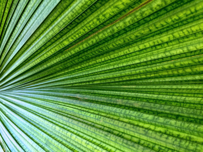 Green Striped Leaf Texture Background Lines Nature Photography Plant Backgrounds Close-up Day Freshness Frond Full Frame Green Color Growth Leaf Nature No People Outdoors Palm Leaf Palm Tree Striped Pattern Tree