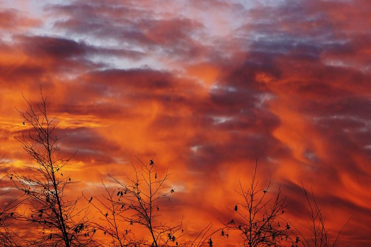 Cloud - Sky Sunset Sky Orange Color Beauty In Nature Nature Dramatic Sky Tree Clouds Weather Clouscape