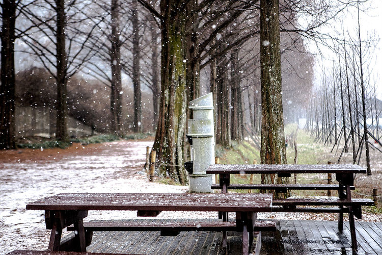 Metasequoiaquoia Damyang Metasequoia Road Damyang Snowing Snow Korea South Korea