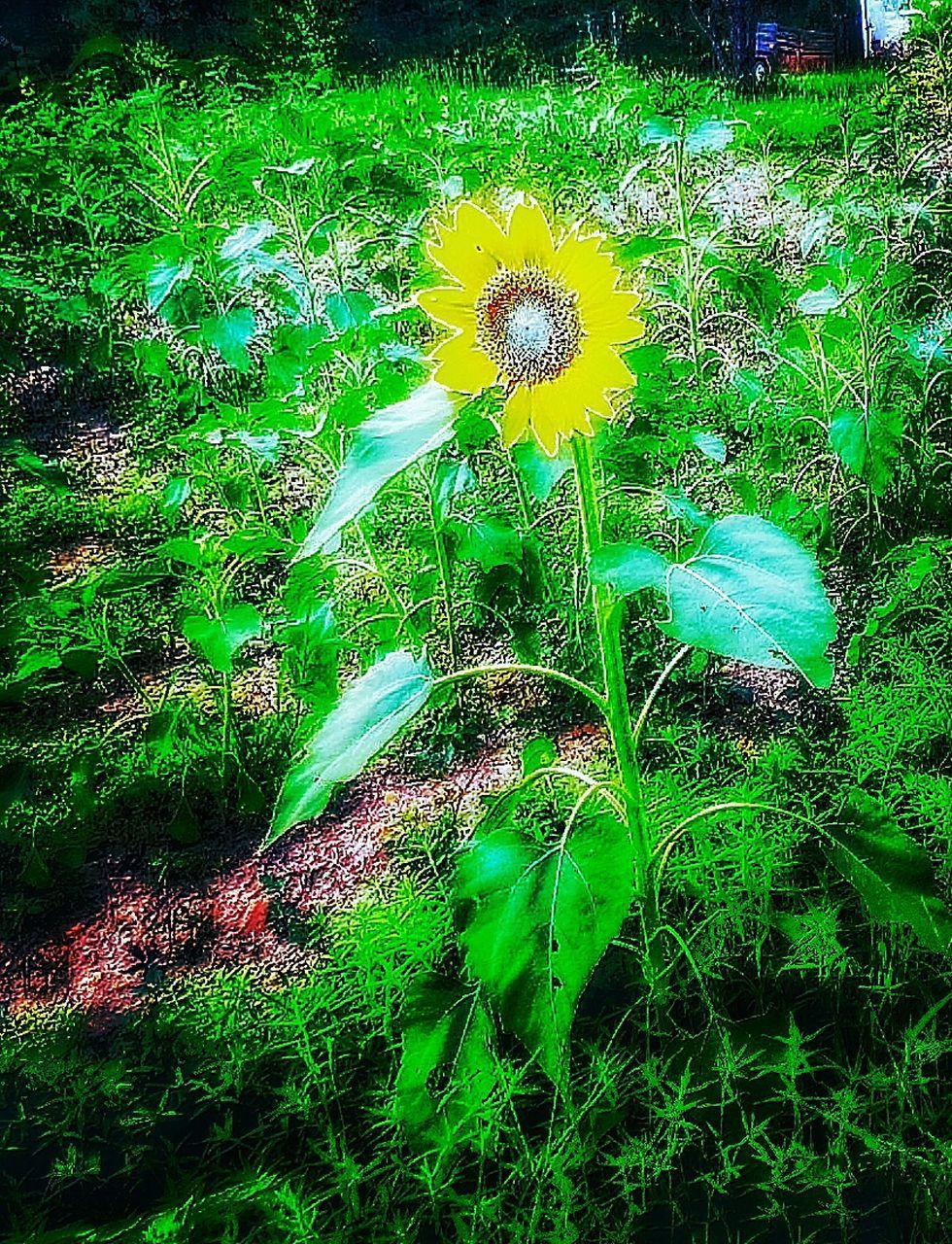 growth, nature, green color, flower, grass, field, beauty in nature, plant, no people, outdoors, day, fragility, freshness