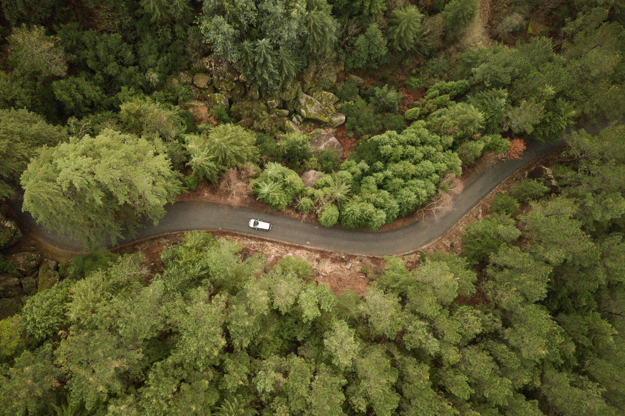 Adventure,  Aerial View,  Car,  Day,  Forest