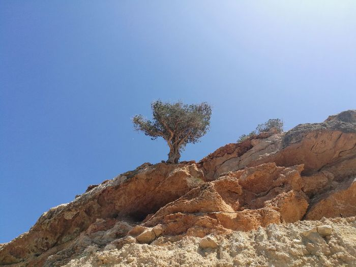 Olive Olive Tree Olive Tree Landescape Landscape Beauty In Nature Rock - Object Tree Nature No People Day Outdoors Clear Sky Sky Plant Scenics Close-up Day Cliff Cliffs And Trees Arid Climate Desert