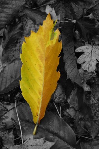 The leaf of colour. Nature On Your Doorstep EyeEm Best Edits EyeEm Best Shots EyeEm Best Shots - Nature EyeEm Nature Lover