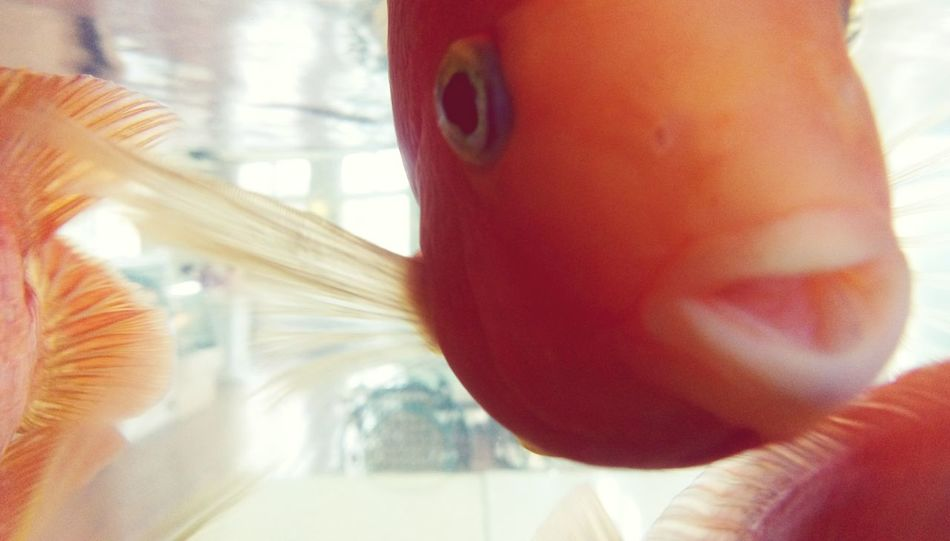 Ocean Creature Fishes Underwater Aquarium Aquarium Life Aquariumfish Fish Tank Creatures Sea Creatures Seafish Water Better Look Twice Showcase: January Q
