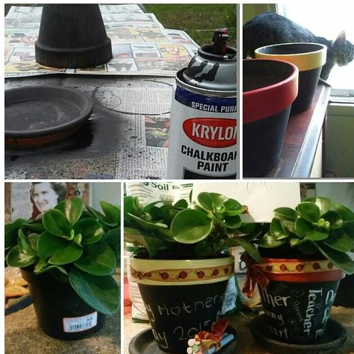 I made these for my Mom ❤ for Mothers Day . she lived them! Crafty Fun With Chalkboard Paint! Plants 🌱 Ribbon (: Easy Cute♡
