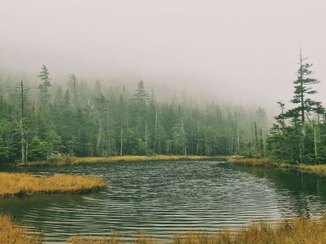 An Adirondack Mountain lake near the summit of Dial Mountain. High Peak Hiking New York Adirondack Mountains Tree Nature Tranquility Tranquil Scene Beauty In Nature Scenics No People Outdoors Water Lake Forest Fog Growth Landscape