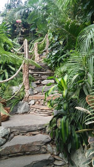 Stairs in jungle, Poland - Stairs Green Color Nature Plant No People Tree Outdoors Beauty In Nature Jungle Green Stones Garden Tarnowskie Góry Beautiful Garden Poland Palm Palm Tree Stone Stairs EyeEmNewHere Travel Long Goodbye The Secret Spaces The Architect - 2017 EyeEm Awards The Great Outdoors - 2017 EyeEm Awards