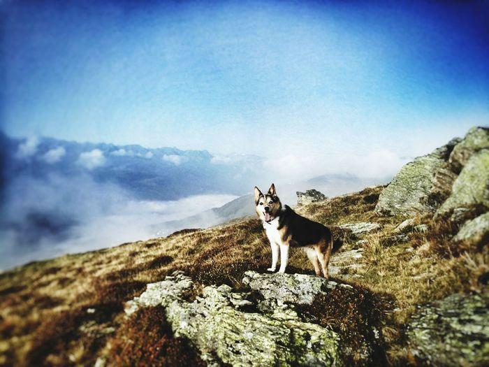 Pets Mountain Dog Portrait Rock - Object Adventure Standing Sky Landscape