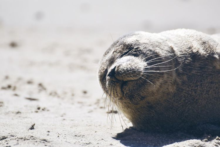 Close-up of an animal resting on beach