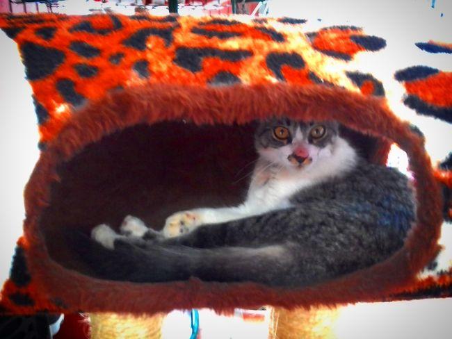Cattoy Lovecats Katoj Gatos Cats Meow Katt Katter Ilovemycats Cute Ilovecats Animais Bestoj Pet Kitten Katzen Kitty Neko Felinos Felines Feline Love_cats Catsofworld