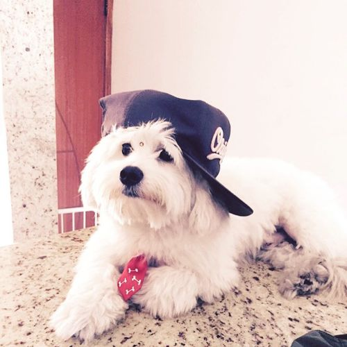 Pet Photography  Cute Pets Pet Good Morning Yesterday Dogs Love ♥ I Love My Dog Brazilian Rogehrodrigues