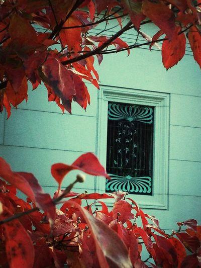 Window Autumn Leaves Autumn Rest In Peace