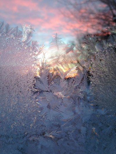 Wisconsin Winter Frosty Sunrise Unedited Photo