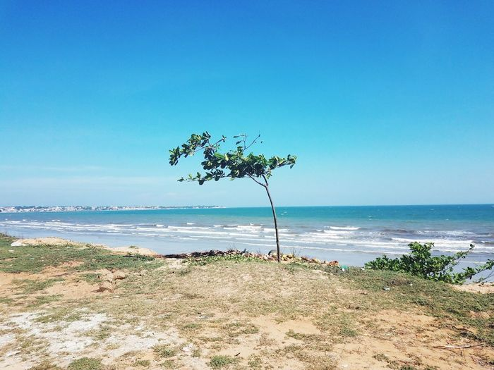 Mũi Né beach vietnam Sea Beach Horizon Over Water Water Day Sky Travel Destinations Sand No People Clear Sky Vacations Landscape Beauty In Nature Tree Outdoors Sea And Sky Seascape Seaview Seascape Photography