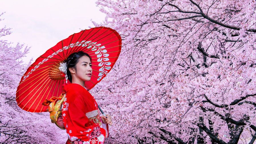 Asian woman wearing japanese traditional kimono and cherry blossom in spring, Japan. One Person Women Clothing Real People Young Women Young Adult Umbrella Lifestyles Protection Portrait Front View Tree Beautiful Woman Adult Leisure Activity Nature Red Plant Beauty Fashion Pink Color Outdoors Hairstyle Springtime