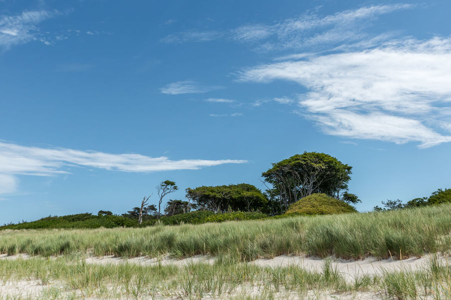 Beach Beauty In Nature Blue Cloud Darß Day Fell The Journey Grass Grassy Green Color Growth Landscape Nature Nature Non Urban Scene Outdoors Rural Scene Sky Tree Weststrand