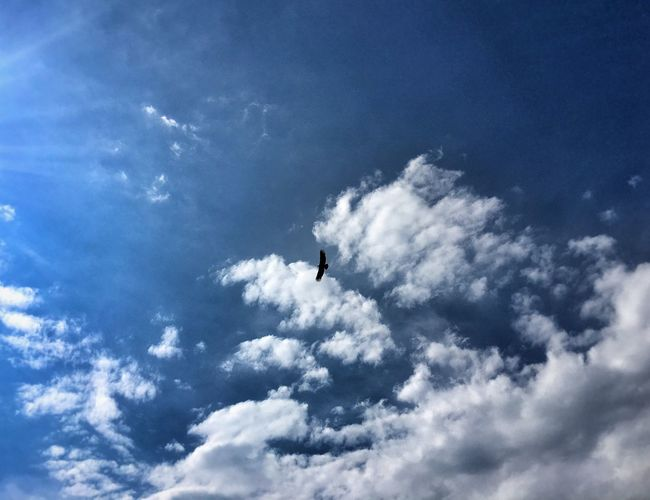 Low Angle View Sky Flying Blue Tranquility Beauty In Nature Scenics Tranquil Scene Nature Mid-air Full Frame Day Cloud - Sky Cloud Outdoors Cumulus Cloud Heaven Majestic Softness Carefree