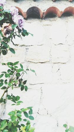 Backgrounds Outdoors Day Flowers Purple Bricks White Wall Tile Stone White Stone EyeEm New Here
